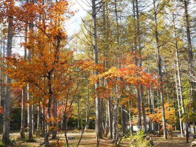 ☆秋の一色の森☆